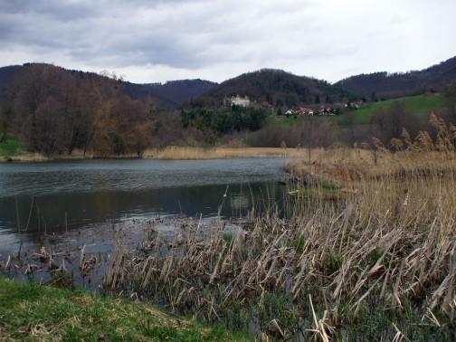 L'étang vert