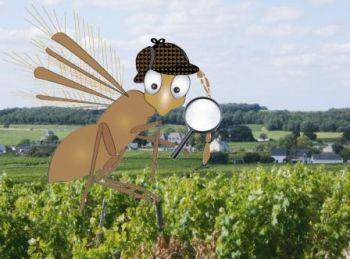 Jeu de piste - Randonnée grandeur nature - Vignes du Saumur-Champigny