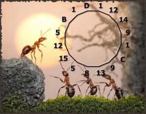 Formicidae – Enigme 2