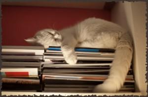 Prix chasses au trésor 2011 des auteurs d'énigmes - Annulé - Le chat dort