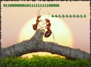 Formicidae - Enigme