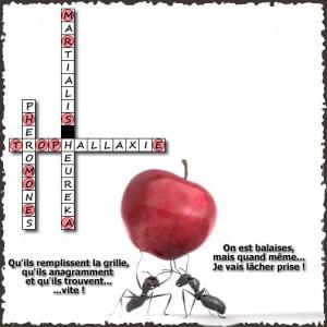 Formicidae - La grille - Solutions