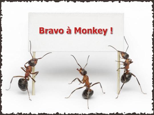 Formicidae - Chasse au trésor terminée