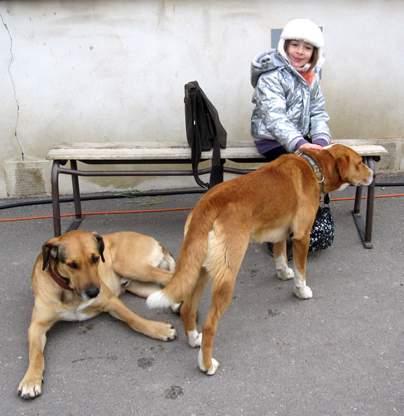 Chiens Chabeuil