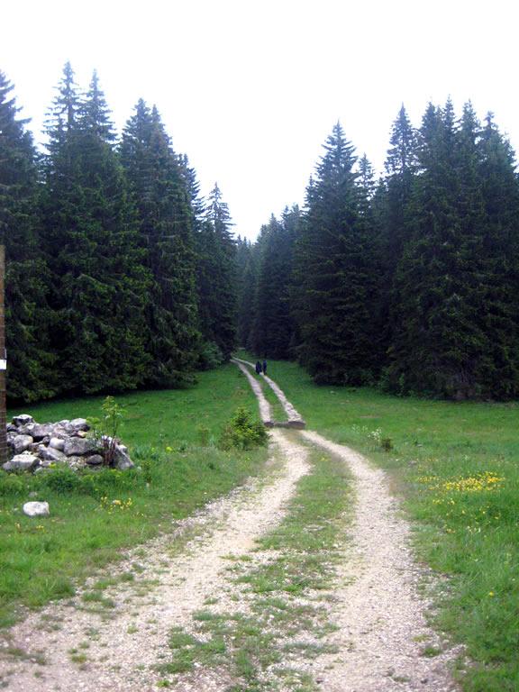 Rewild Jura