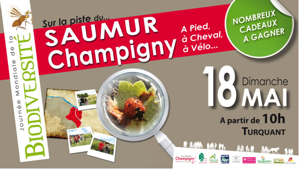 Sur la piste du Saumur-Champigny