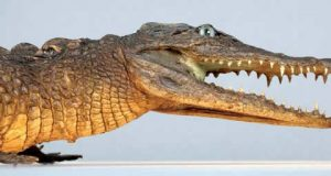 Bayonne : Grand Jeu du Muséum – Sur les traces des trésors cachés