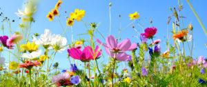 Fleurs - Nature